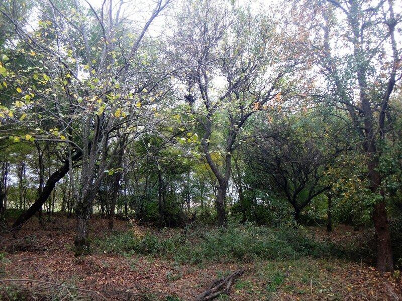 В осеннем лесу ... Октябрь. Суббота. В походных условиях (7).JPG
