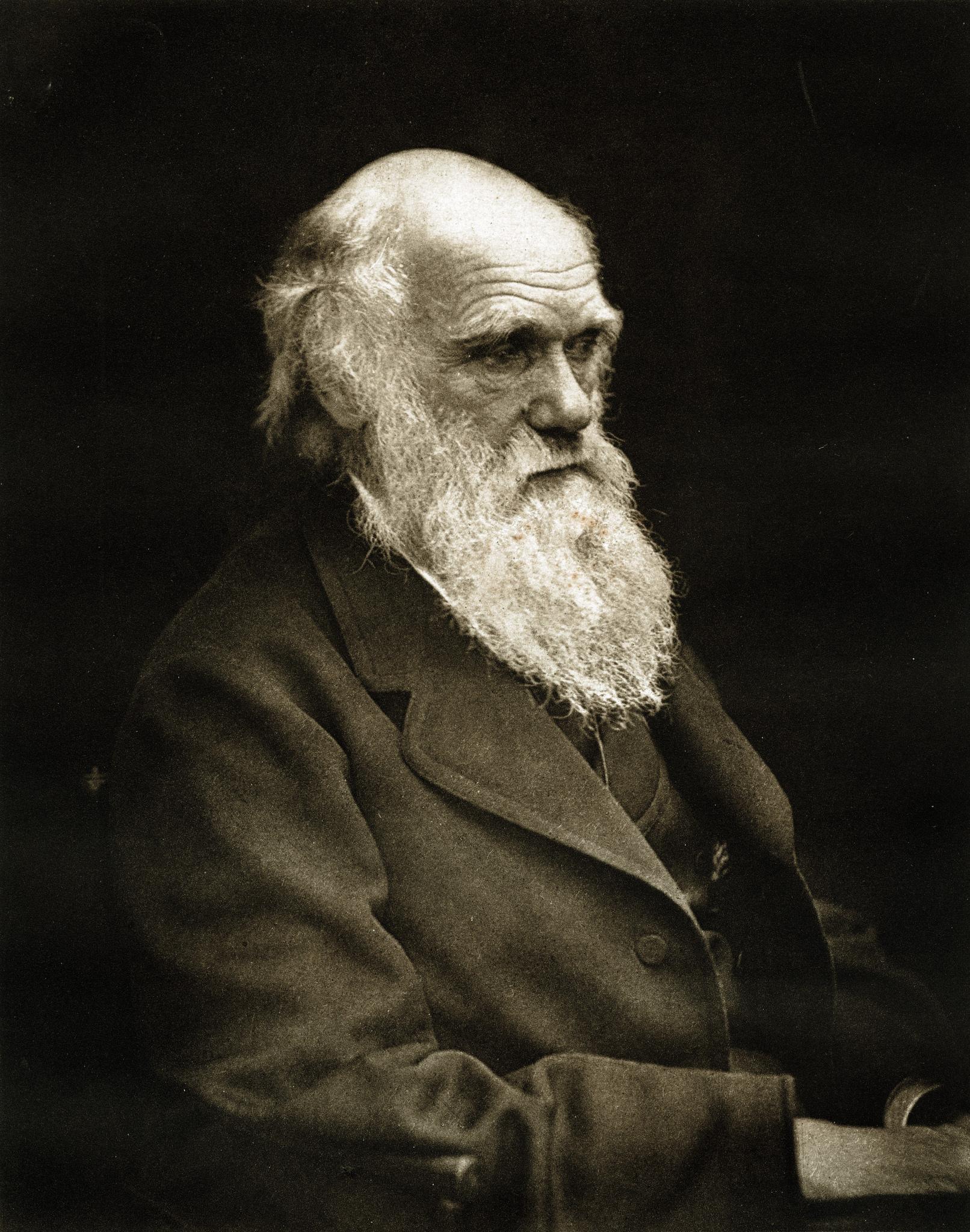 1878. Чарлз Роберт Дарвин (12 февраля 1809 — 19 апреля 1882) — английский натуралист и путешественник