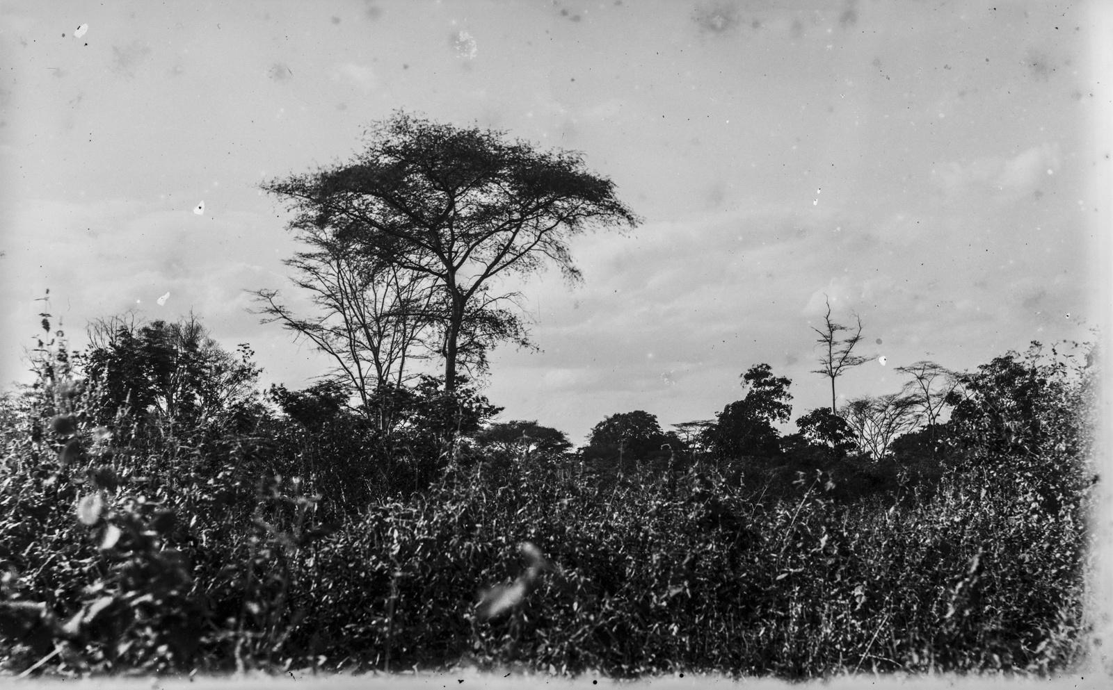 37. Растительность в районе Аруши