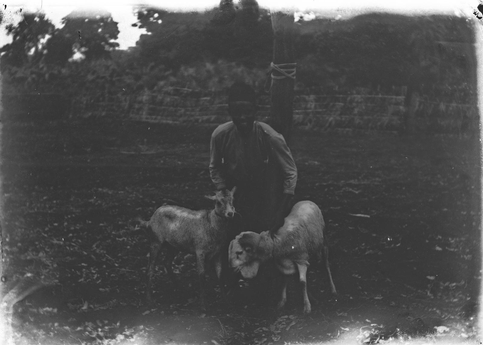 177. Портрет мальчика-чагга с овцами и козами
