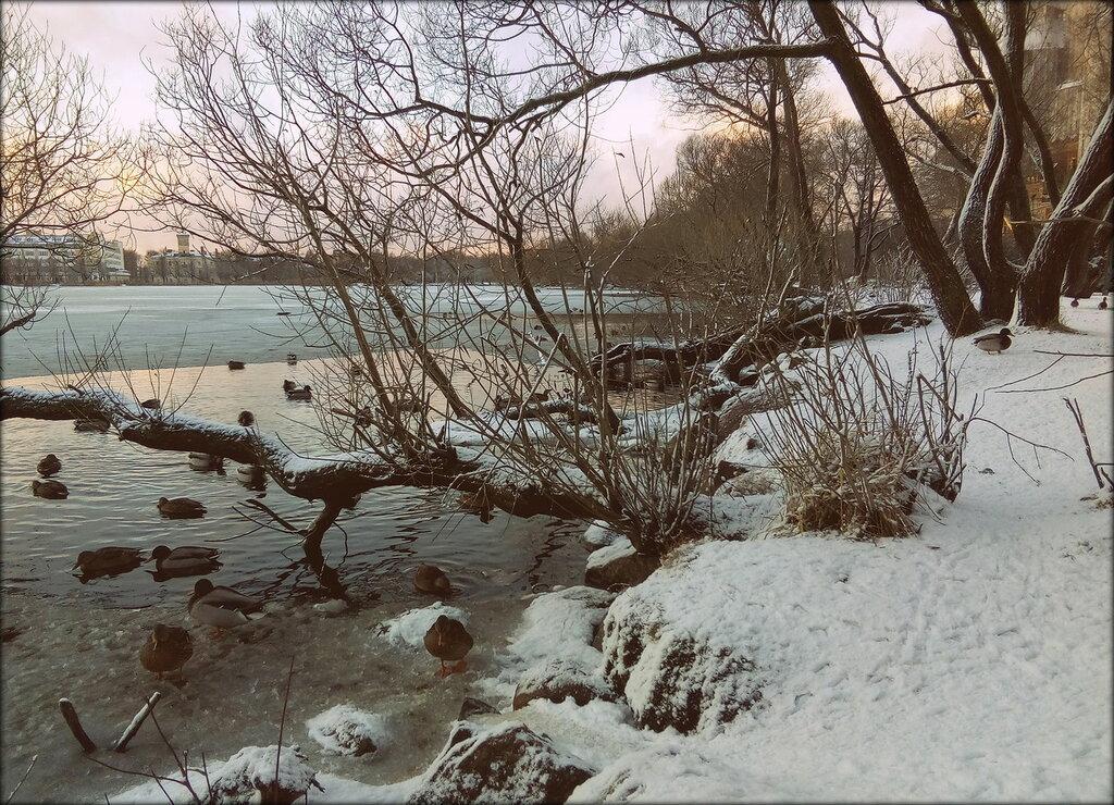 На Ольгином пруду