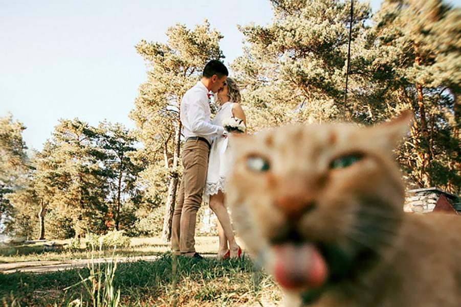 На свадьбе все пошло не так