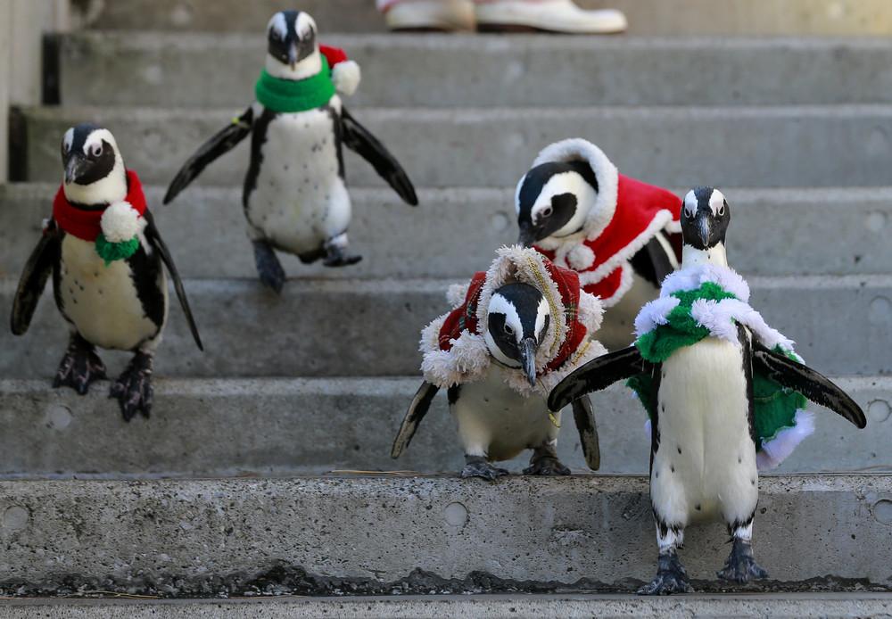 Картинка с пингвином доброе утро, место