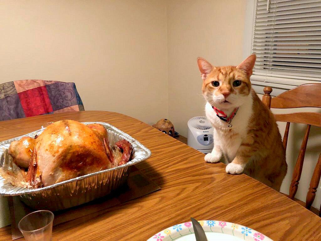 Titan& Elvis  on Thanksgiving Day