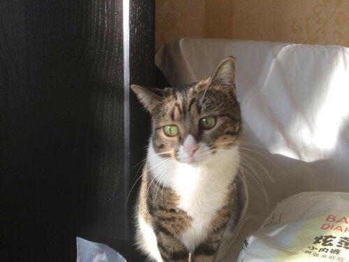 Шери кошка из приюта догпорт фото