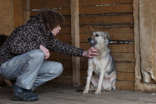 Буся собака из приюта в москве догпорт фото
