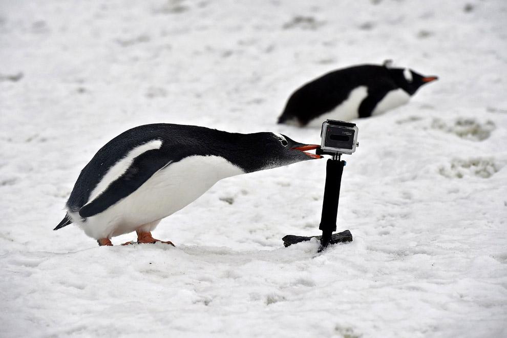 17. Северное сияние. (Фото Joshua Swanson   National Science Foundation):