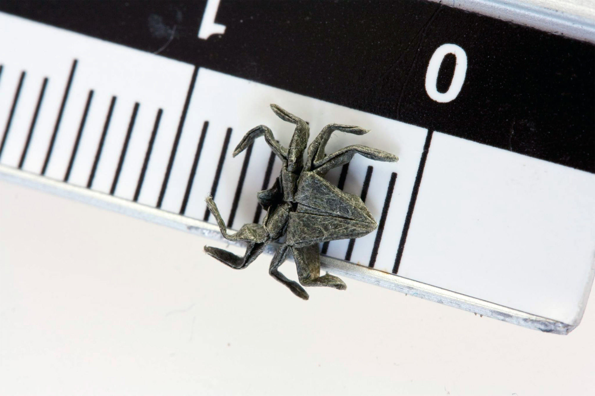 Nano Origami: Infinitesimal Folded Paper Creations by Anja Markiewicz
