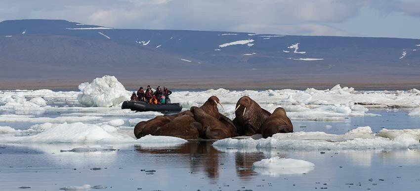 Wrangel_Island_©ABreniere-Across-the-Top-of-the-World-850.jpg
