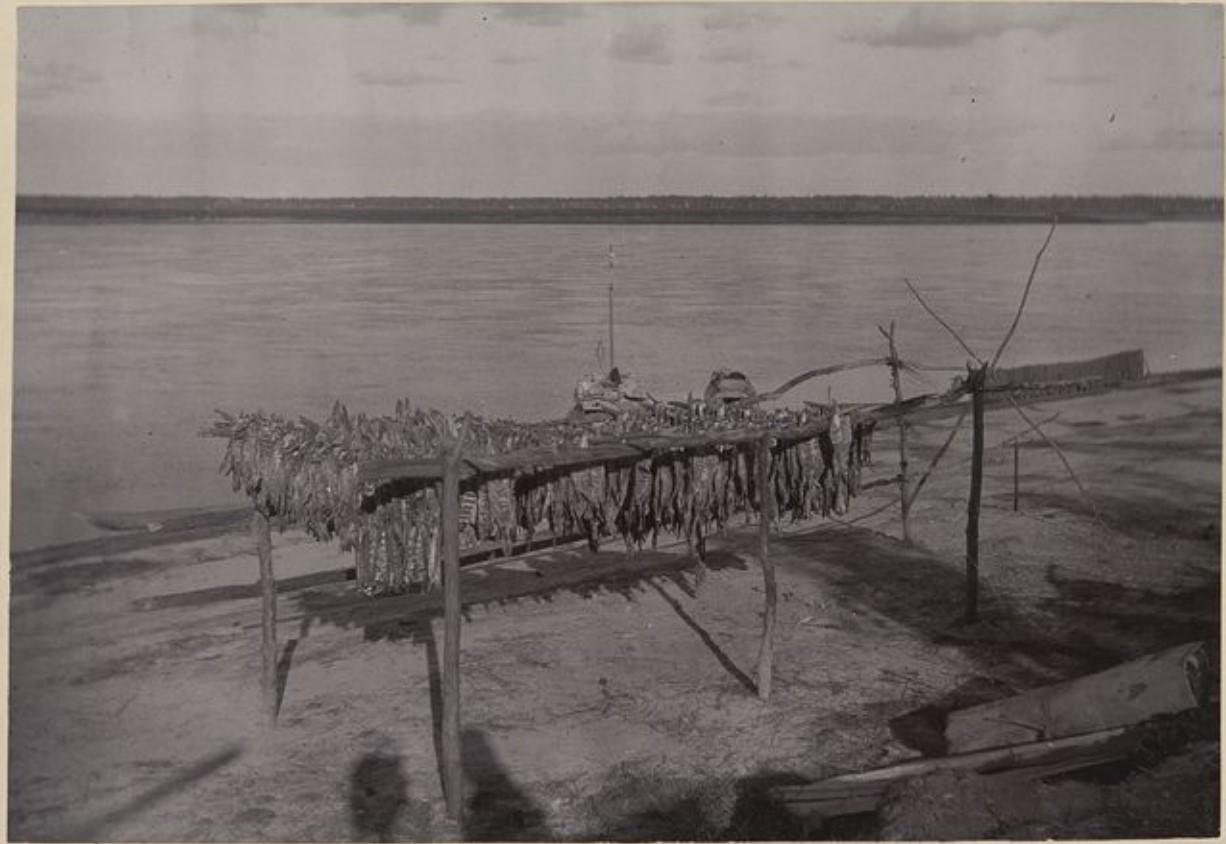 На реке Вах. Сушка рыбы
