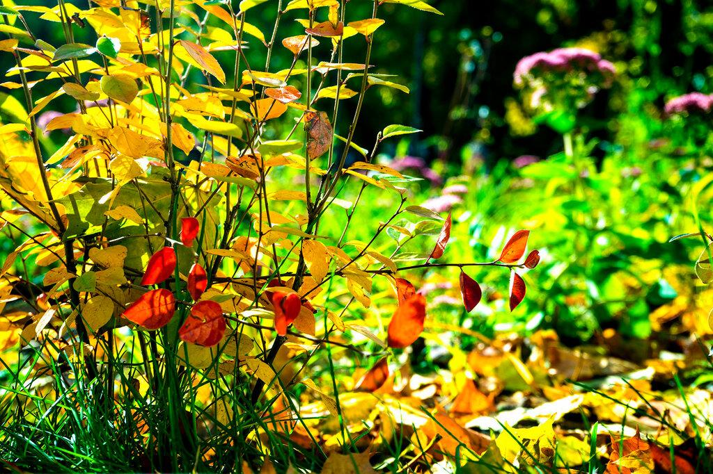 осень на Красногвардейском бульваре.jpg