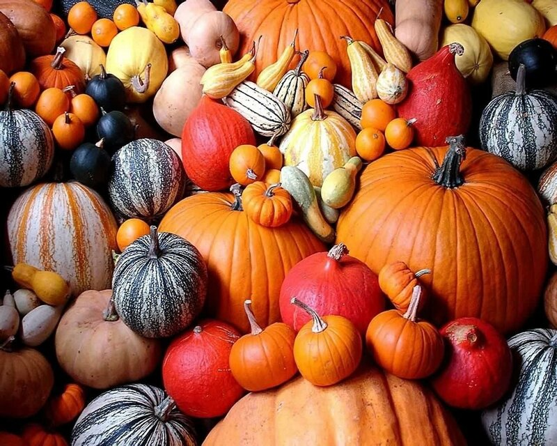 4027981-pumpkin-wallpapers.jpg