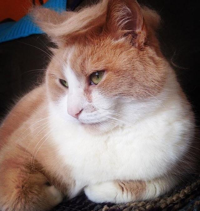 Tramp you Cat: Преврати кота в Трампа!