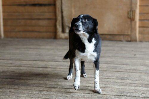 Бакс собака из приюта догпорт фото