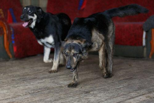 Джорджия собака в добрые руки из приюта фото