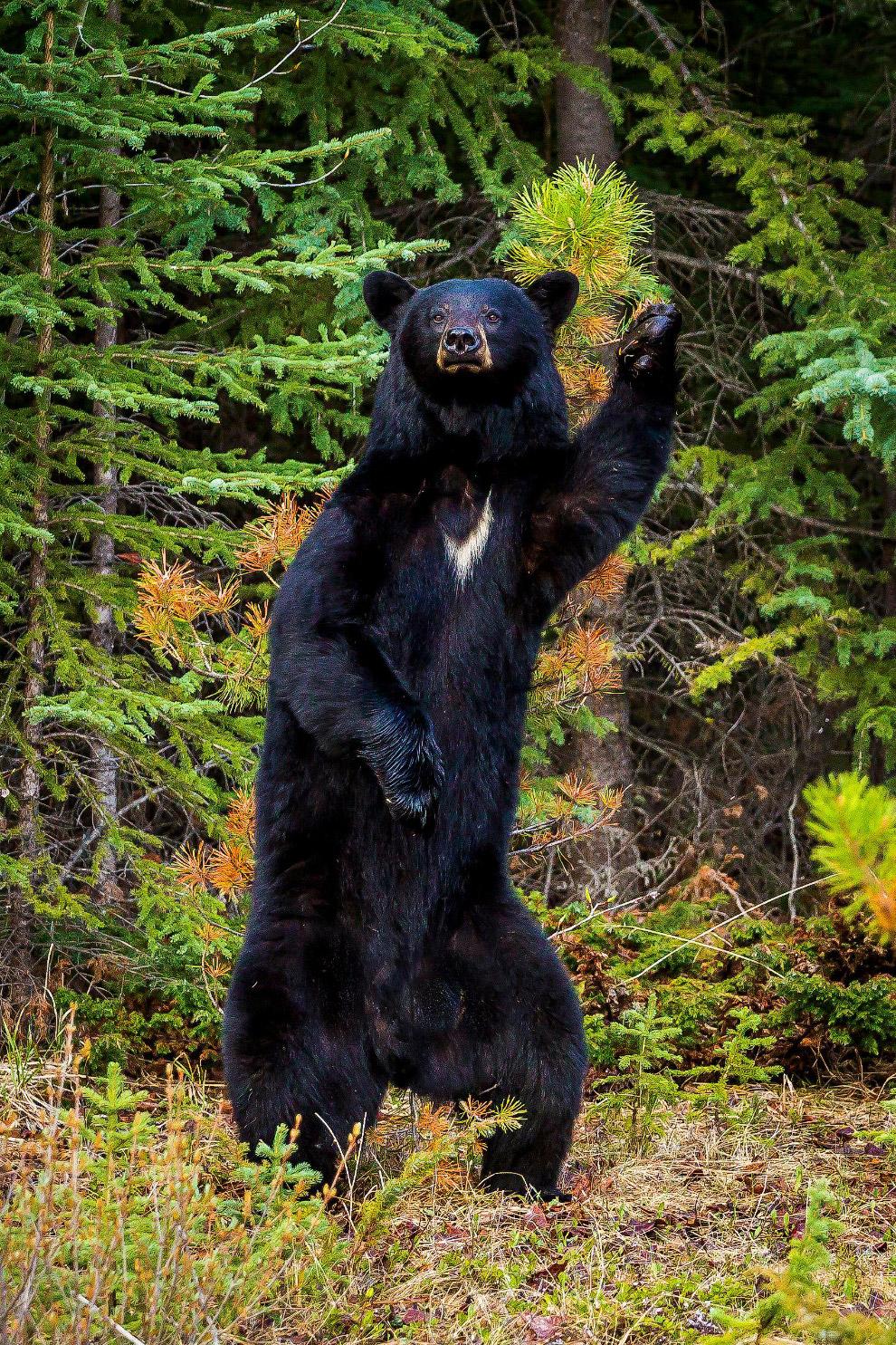 23. Хвост… (Фото Daisy Gilardini | Comedy Wildlife Photography Awards):