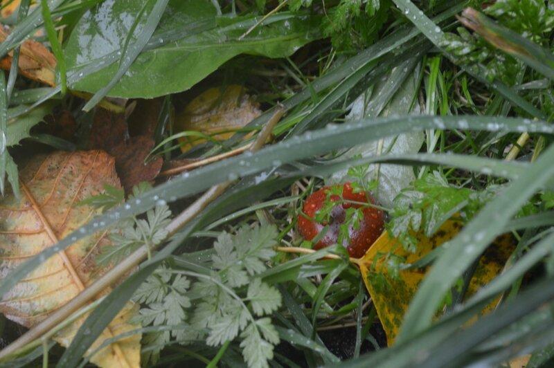 каштаны под дождем