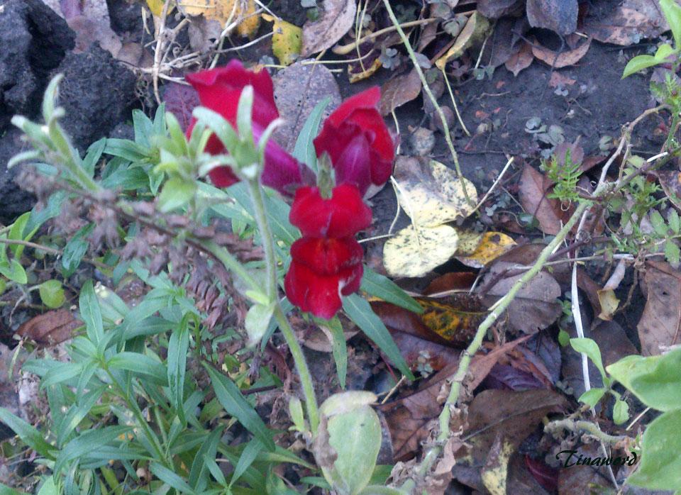 цветы-осени-25.jpg