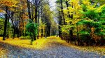 Краски осень расплескала... Карелия. Петрозаводск