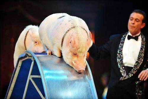 Кабаны-альбиносы