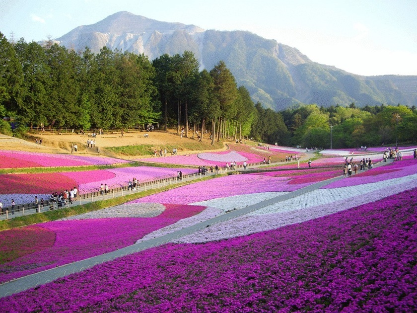 Цветущий розовым японский парк Хицудзияма. Фотографии 0 141ad1 d44d75e5 orig