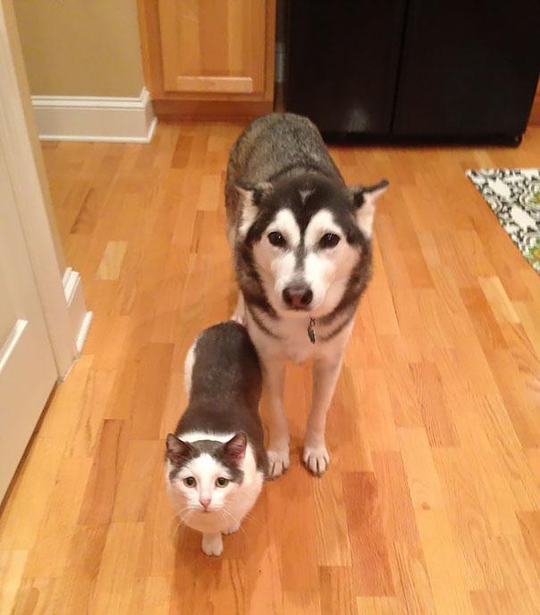 В мире животных: родные братья и сестры от разных мам (17 фото)