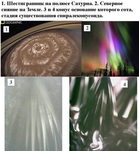 Сотовые структуры в природе