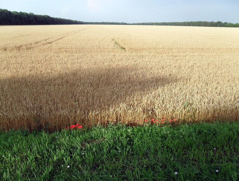 В полях, июнь 2012