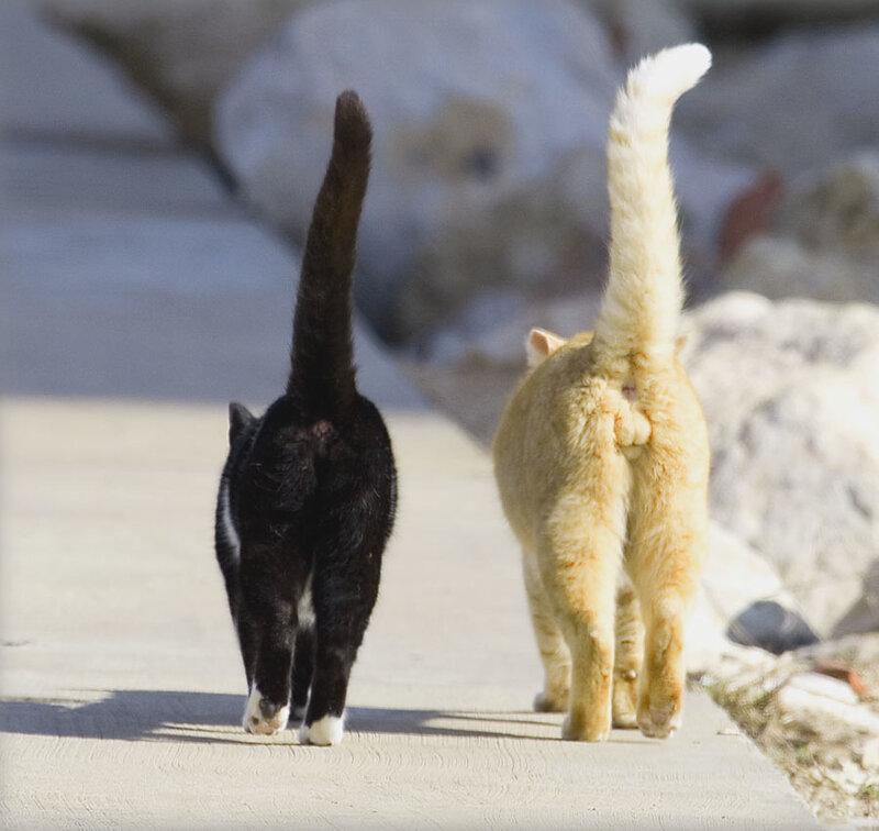 Хвост у кота трубой