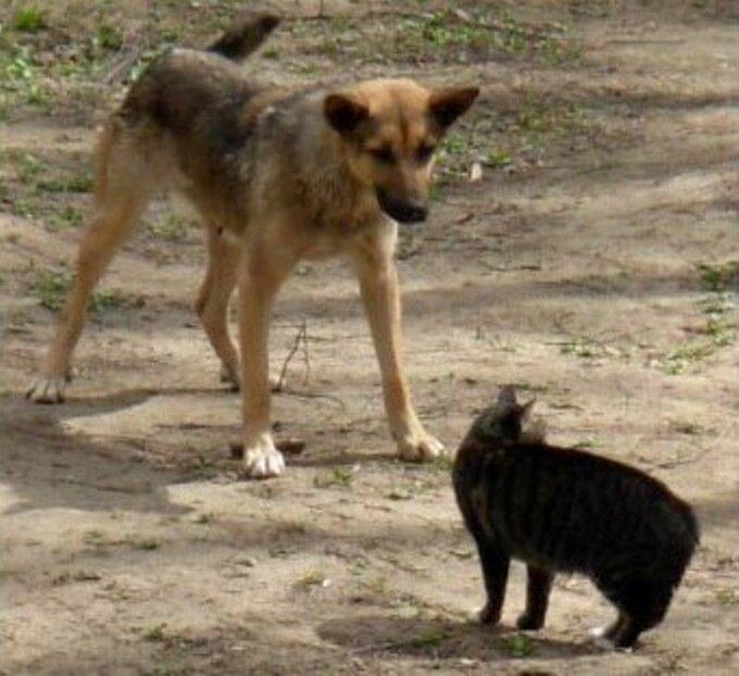Танцы с котами