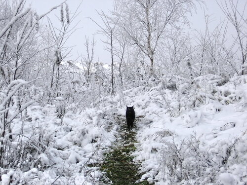 дорогами чорного кота