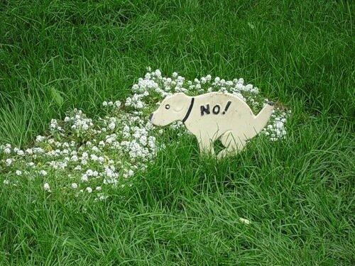 Во Львове ввели штраф для владельцев собак