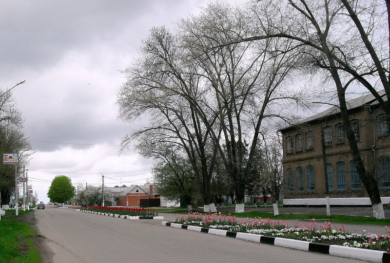 Апрельский тюльпановый рай в Ахтарях. (15)