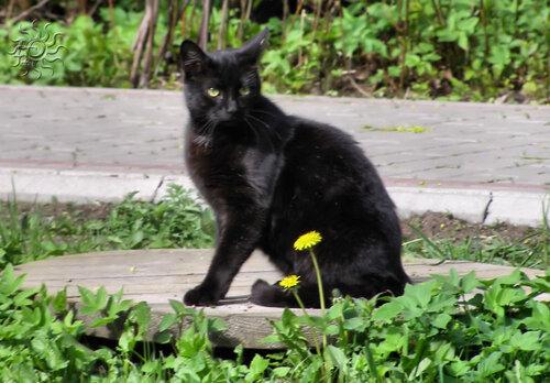 Черная красавица