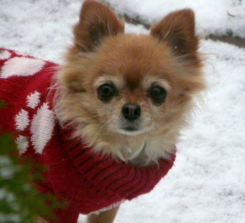 С Новым Годом рыжей собаки, дорогие друзья!