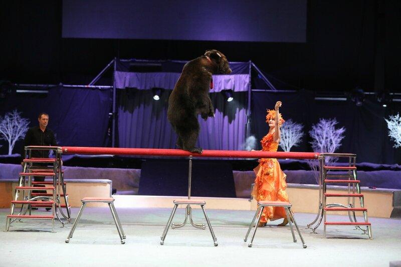 забавные медведи