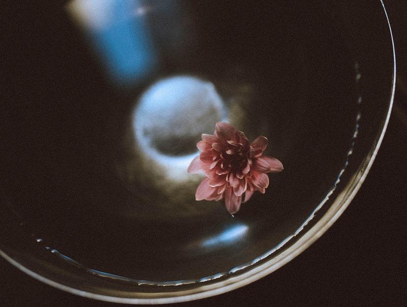 Ho sognato orchidee ed ho comprato margherite / фотограф Fabrizia Milia