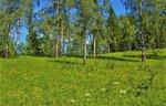 IMG_6067.JPG Лилейная поляна