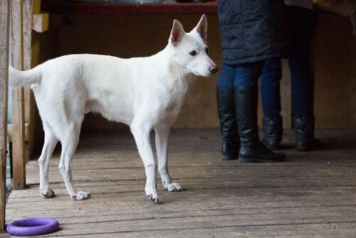 Бланко Нуар собака в добрые руки в москве фото