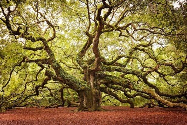 10. Деревья, пытающиеся выдержать новозеландский ветер
