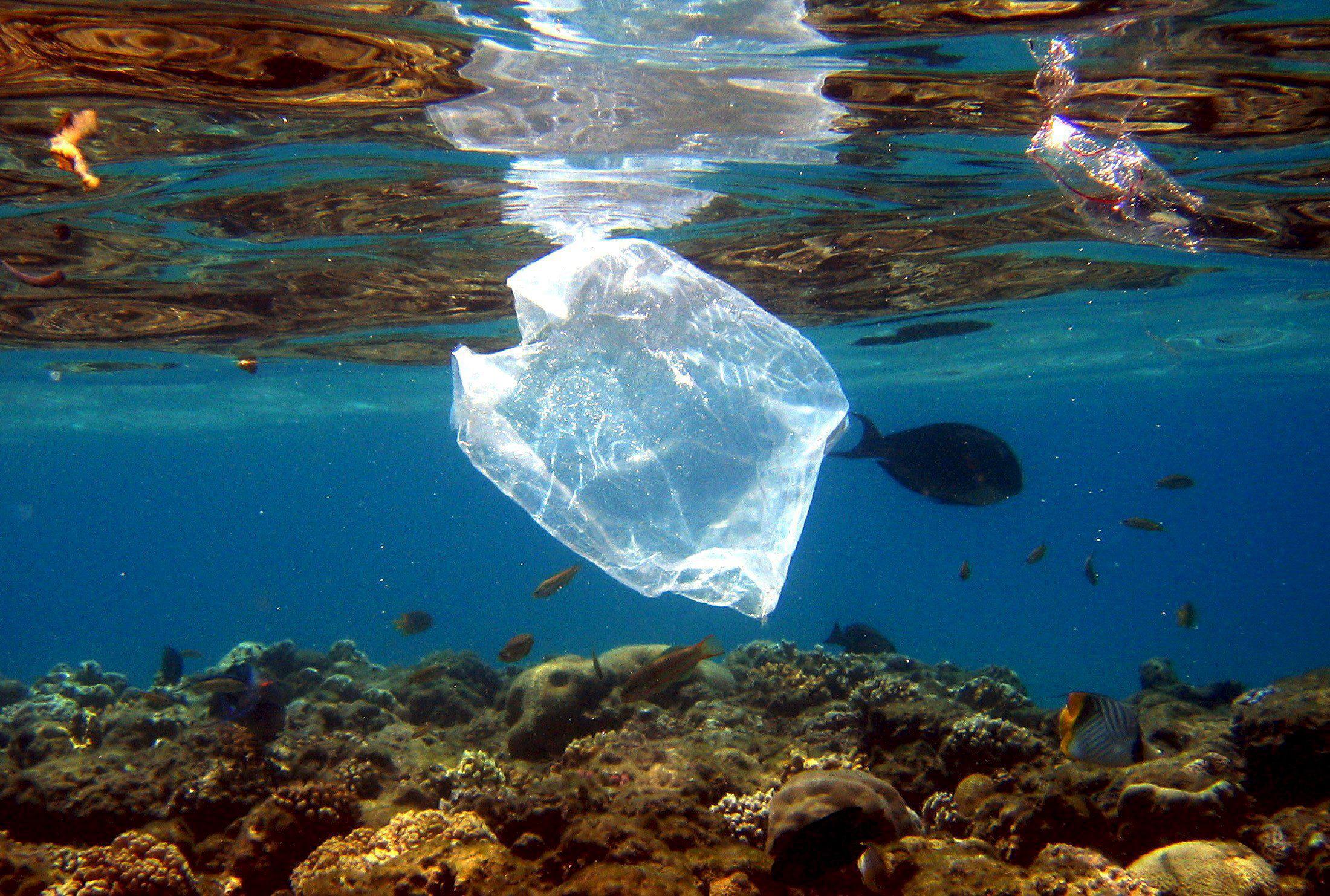 Пластиковые пакеты — самый распространенный вид мусора в океане.    Проблема в плохой экологиче