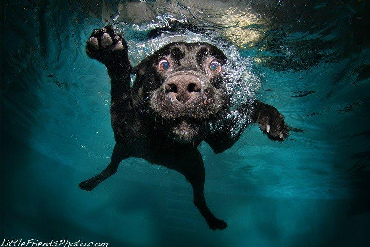 С этого момента Сет Кастиль увлекся подводной фотографией с собаками. До этого, собак с такого ракур