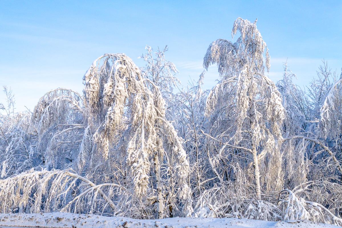 снег лес фото 2