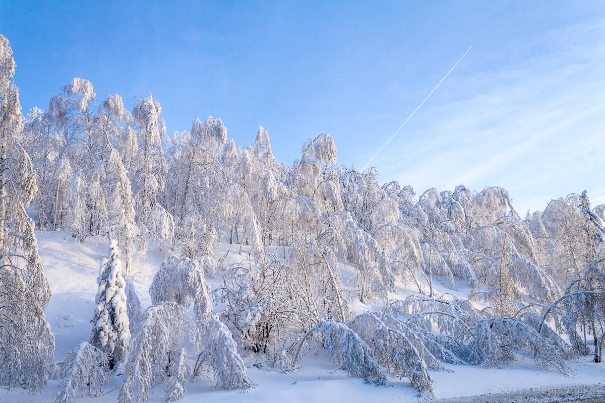 снег лес фото 1