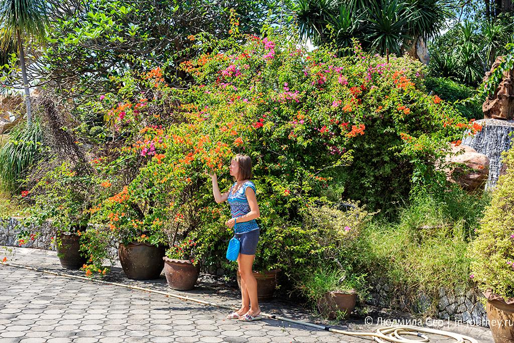 цветущие растения в парке миллионолетних камней