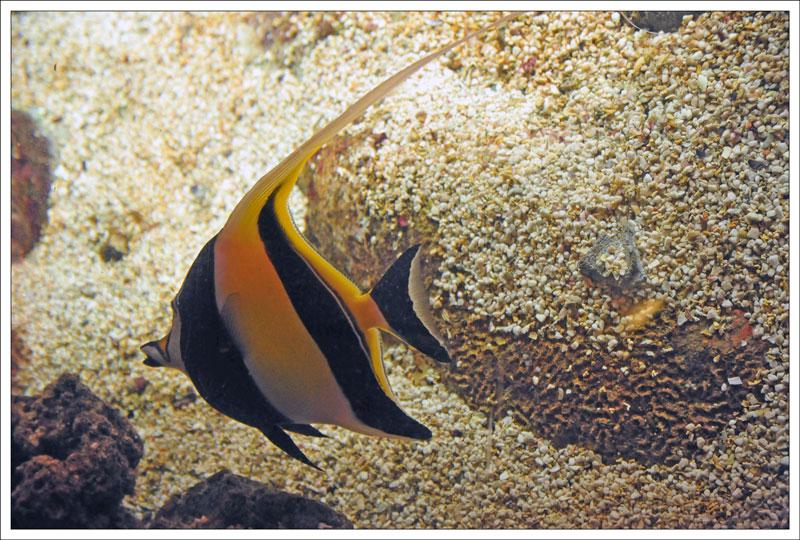 Генуэзский аквариум. Мавританский идол и Рыба-клоун