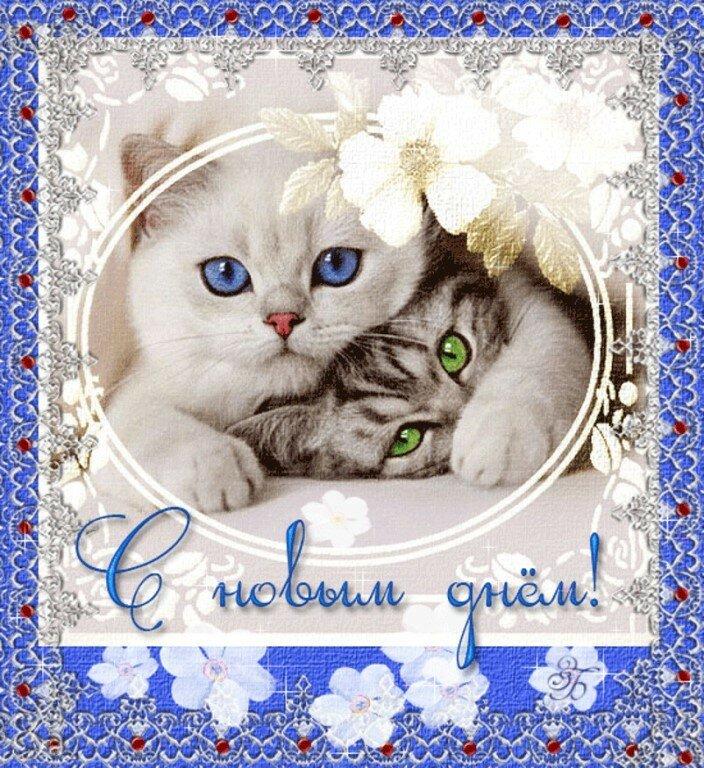 Доброго дня котенок картинки