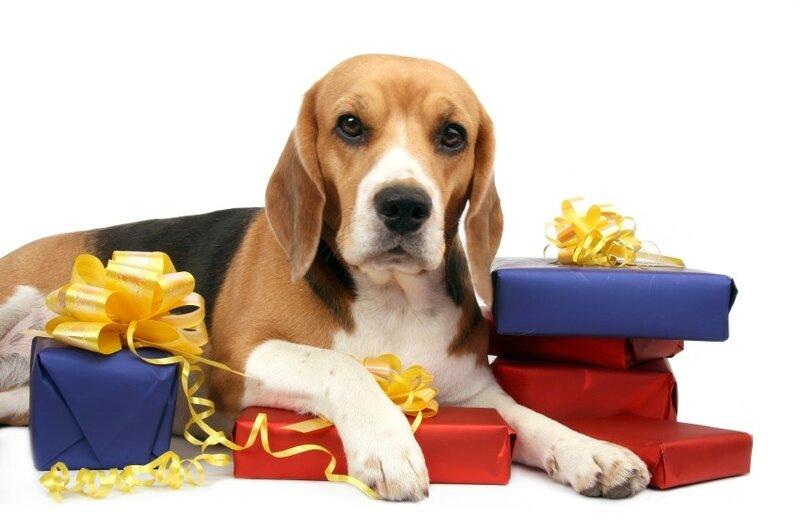 Открытка подарок для собаки