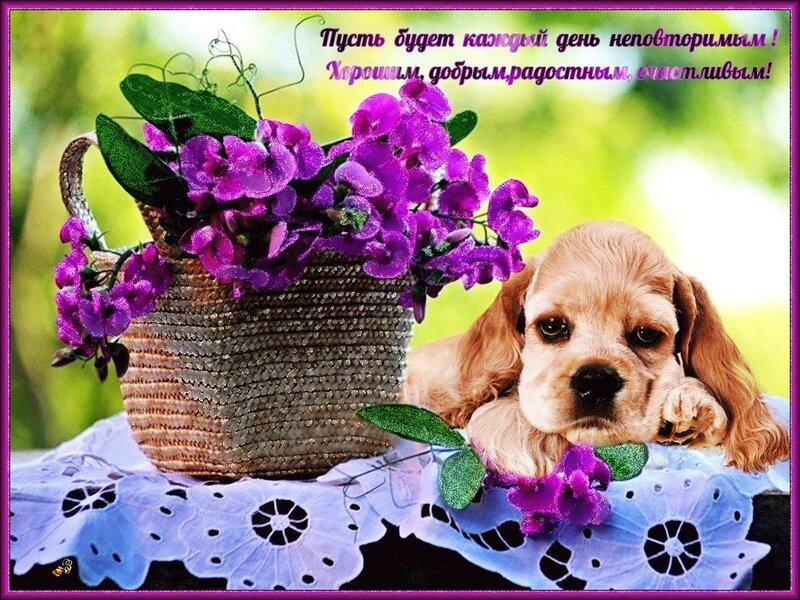 Открытки музыкальные собаки, открытки днем