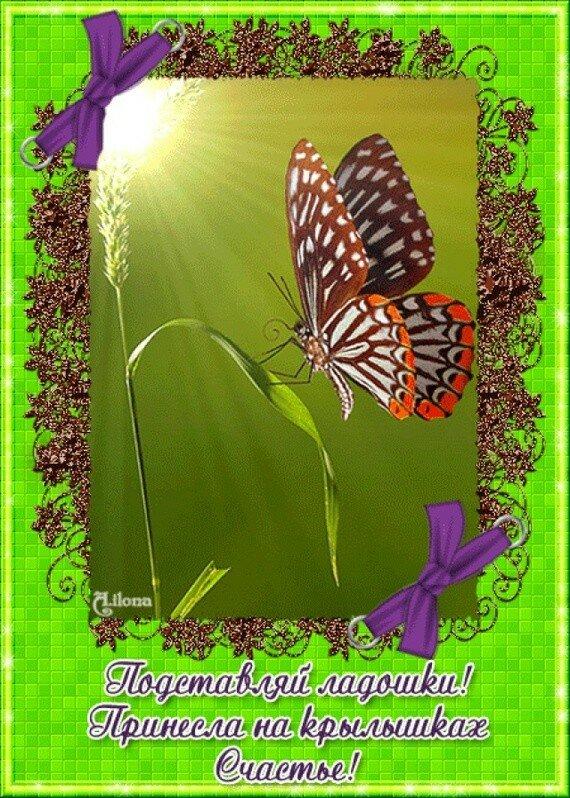 Именем макс, картинки с бабочками и пожеланиями